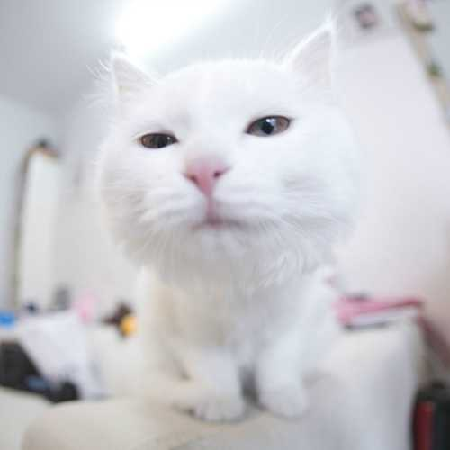 小猫猫可爱卖萌照片 可爱小猫咪卖萌图片